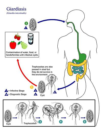 Criptosporidiu și giardia în apă - Tratament criptosporidiu și giardia